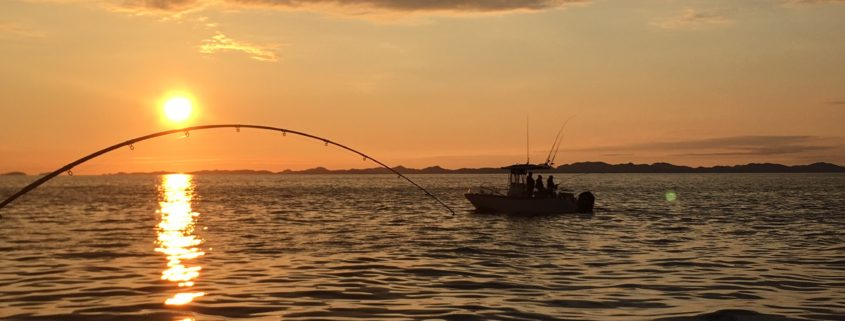Sunset Fishing Trips
